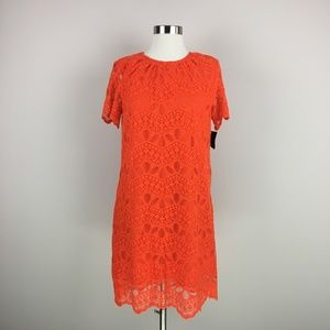 NWT Zara Basic Collection Lace Shift Dress M